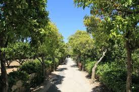 Buskett Gardens.jpg