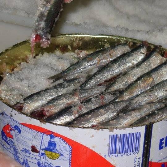 Latta Sarde Salate.jpg