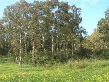 bosco-scorace.jpg