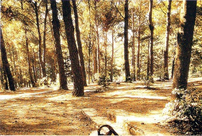 Area Attrezzata Casaboli.jpg
