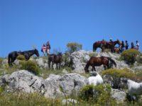 cavalli al pascolo sulo monte vecchio 100512.jpg