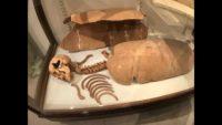 museoarcheologico gozo.jpg