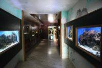 Acquario siracusa - interno.jpg