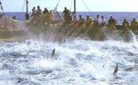 Pesca del Tonno a Favignana1.jpg
