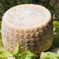 """Formaggio di capra siciliano """"Formaggiu ri capra"""".jpg"""