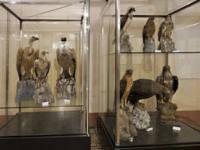 museorinitologico-web.jpg