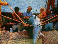 Pesca del Tonno a Favignana.jpg