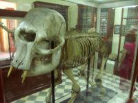 GharDalam-elefante nano.jpg