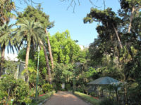 messina_ortobotanico2.jpg