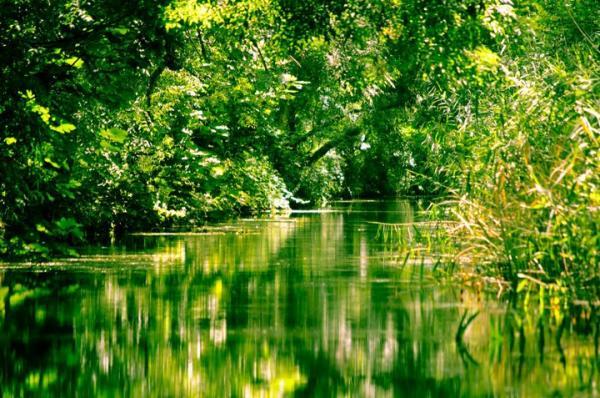 riserva-naturale-regionale-orientata-fiume-ciane-e-saline-siracusa
