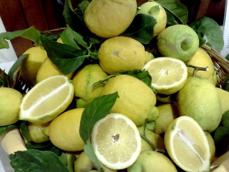 limone-in-seccagno-di-pettineo